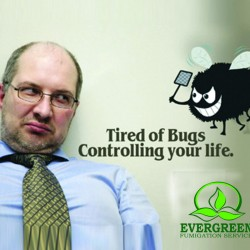 Bugs Evergreen Fumigation
