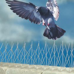 200_bird-spikes-gull-pigeon-crow-rook-weather-water-resistant-proof-gutter-ridge-window-cill-ledge-attic-roof-chimney-default_1_9